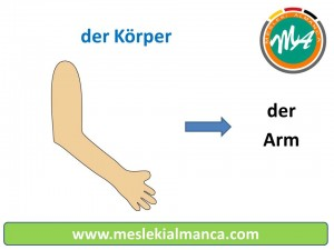 der Arm