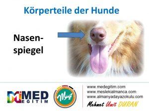 Köpeklerin Vücut Parçalarının Almancası - Körperteile der Hunde 14