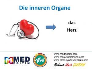 İç Organların Almancası - Die inneren Organe 2