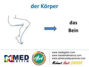 der Körper - Vücudun Bölümlerinin Almancası 17