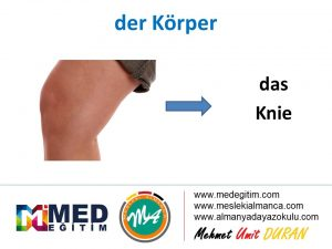 der Körper - Vücudun Bölümlerinin Almancası 15