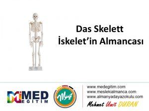 Das Skelett - İskeletin Almancası 5