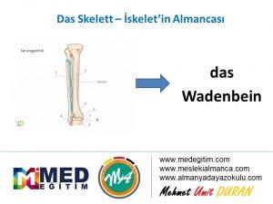 Das Skelett - İskeletin Almancası 6