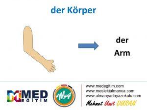 der Körper - Vücudun Bölümlerinin Almancası 13
