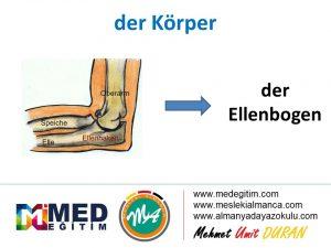 der Körper - Vücudun Bölümlerinin Almancası 7