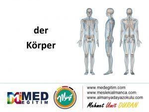 der Körper - Vücudun Bölümlerinin Almancası 11