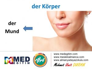 der Körper - Vücudun Bölümlerinin Almancası 6