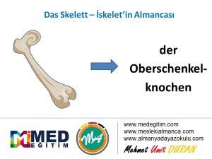 Das Skelett - İskeletin Almancası 9