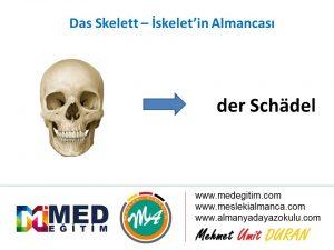 Das Skelett - İskeletin Almancası 10