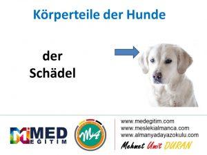 Köpeklerin Vücut Parçalarının Almancası - Körperteile der Hunde 6