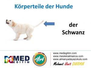 Köpeklerin Vücut Parçalarının Almancası - Körperteile der Hunde 7