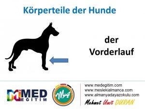 Köpeklerin Vücut Parçalarının Almancası - Körperteile der Hunde 8