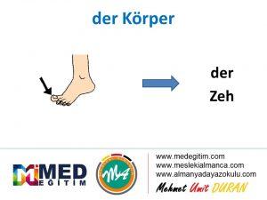 der Körper - Vücudun Bölümlerinin Almancası 2