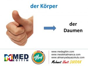 der Körper - Vücudun Bölümlerinin Almancası 3