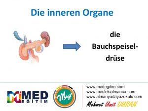 İç Organların Almancası - Die inneren Organe 5