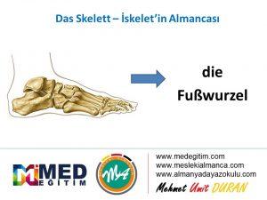 Das Skelett - İskeletin Almancası 12