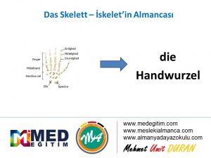 Das Skelett - İskeletin Almancası 13