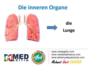 İç Organların Almancası - Die inneren Organe 8