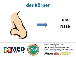 der Körper - Vücudun Bölümlerinin Almancası 4