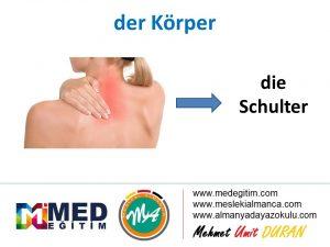 der Körper - Vücudun Bölümlerinin Almancası 5