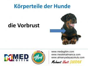 Köpeklerin Vücut Parçalarının Almancası - Körperteile der Hunde 11