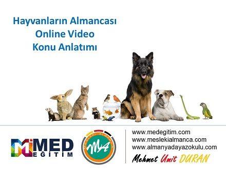 Hayvanların Almanca Karşılıkları ve Sorulabilecek Muhtemel Sorular 1