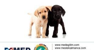 Köpeklerin Vücut Parçalarının Almancası - Körperteile der Hunde 48