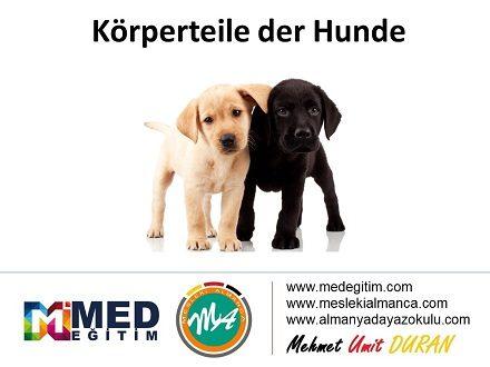 Köpeklerin Vücut Parçalarının Almancası - Körperteile der Hunde 1