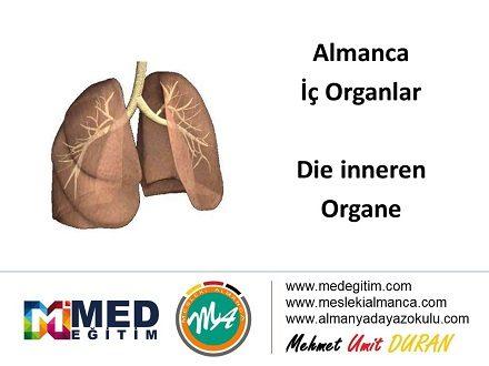 İç Organların Almancası - Die inneren Organe 1