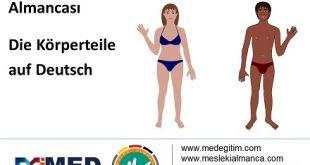 Almanca Vücudun Bölümleri - Die Körperteile auf Deutsch 8