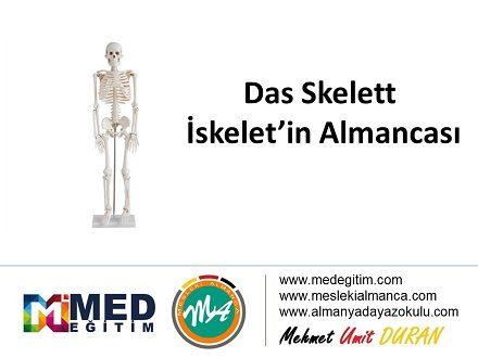 Das Skelett - İskeletin Almancası 1