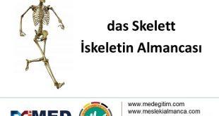 İskeletin Almancası - das Skelett 13